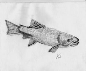 CorrinaFish